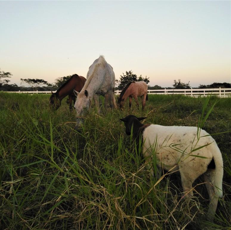 Belize San Ignacio Carmelita Gardens 6