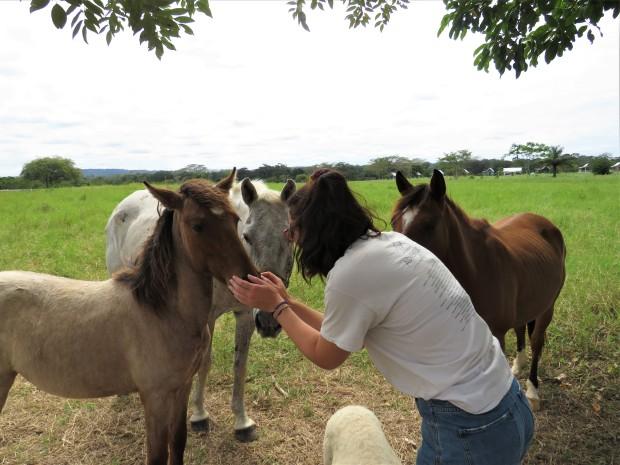 Belize San Ignacio Carmelita Gardens Horses 6