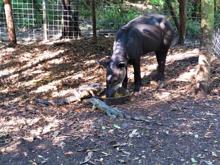 Belize Zoo 1