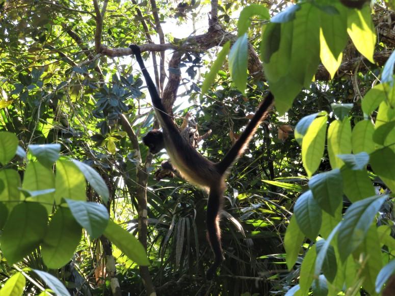 Belize Zoo 2