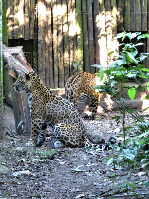 Belize Zoo 9